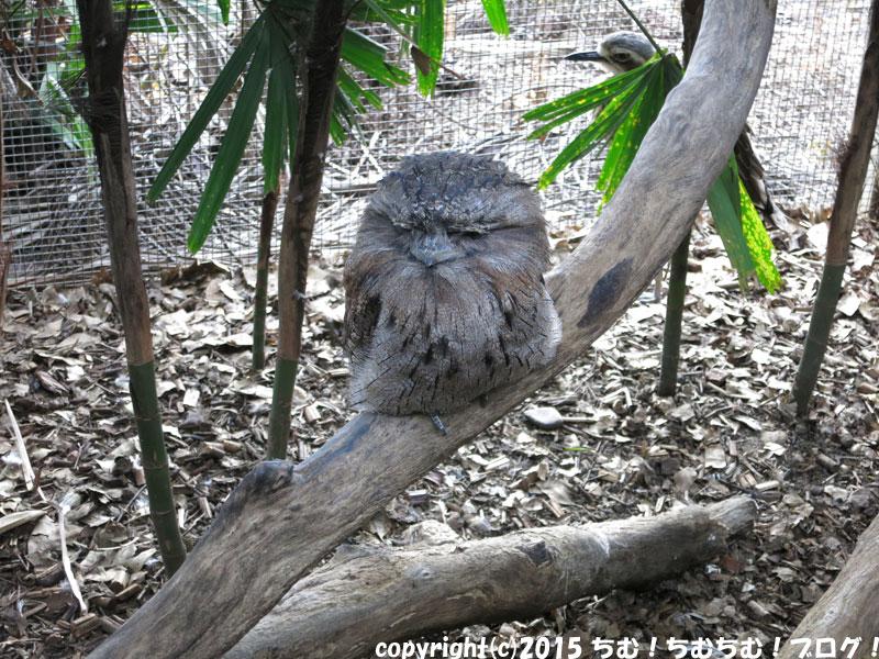 ケアンズドームのフクロウ