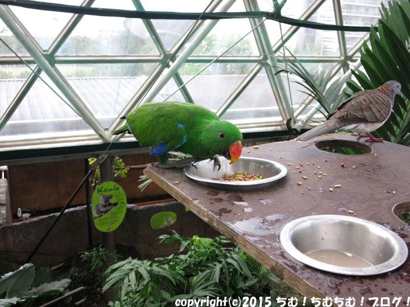 餌を食べる鳥