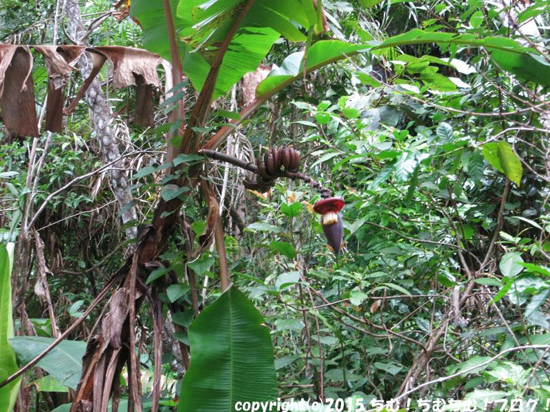 熱帯雨林の植物