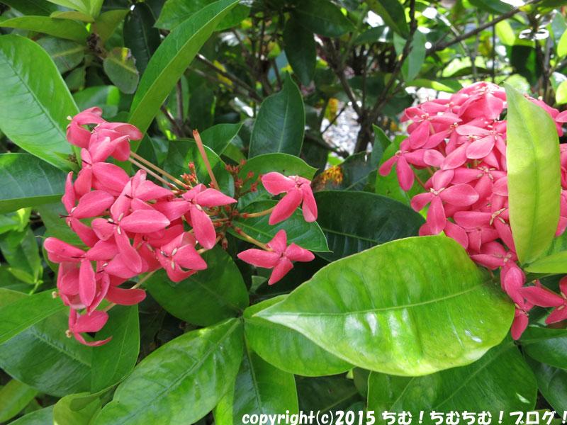 熱帯地方の花