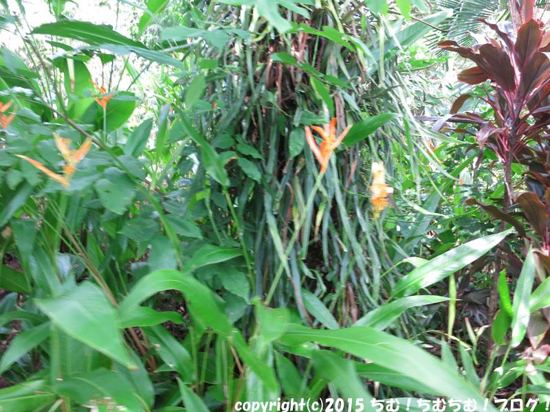 シェラトンの植物