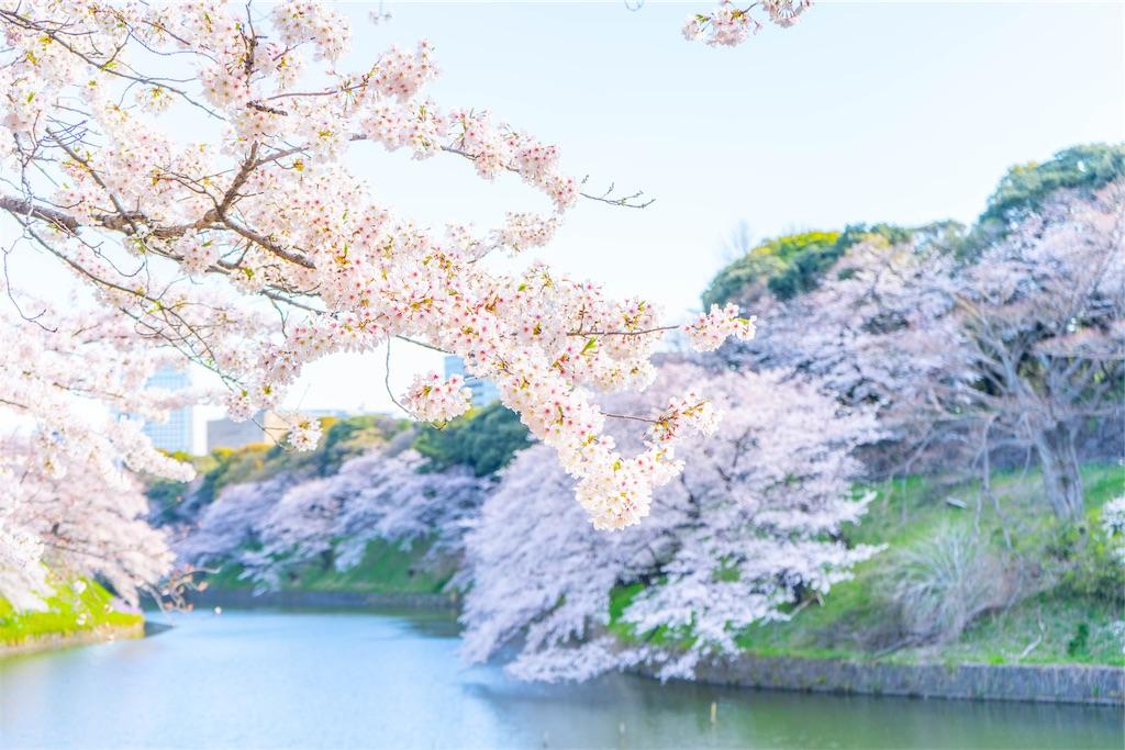 f:id:kira_kira_boshi:20190408172138j:image
