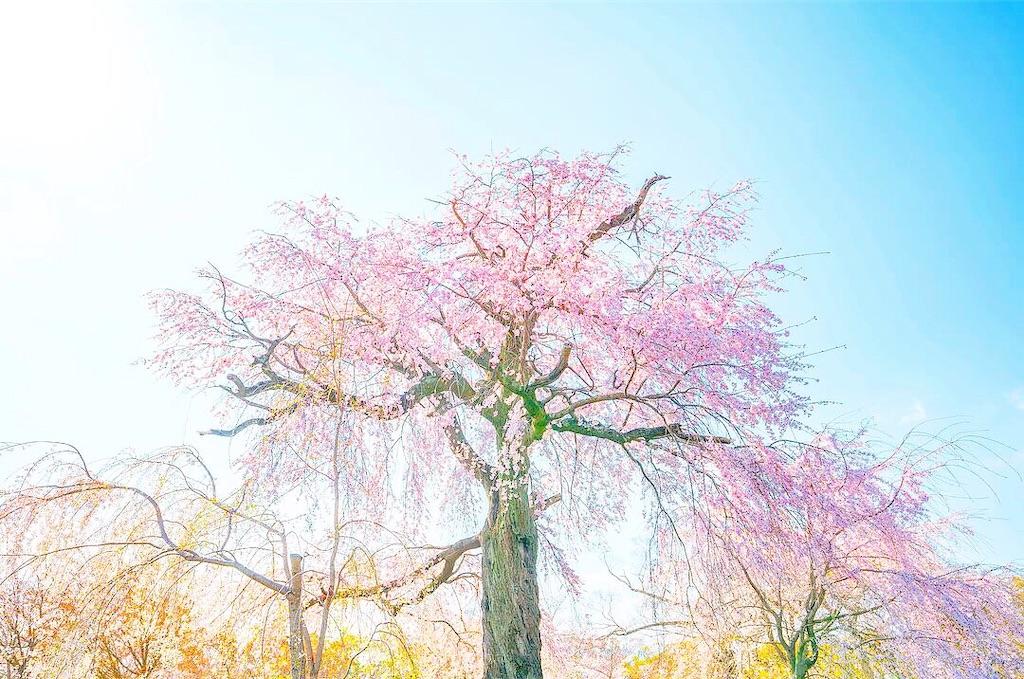 f:id:kira_kira_boshi:20200404141616j:image