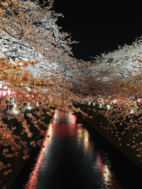 目黒川 桜 2020