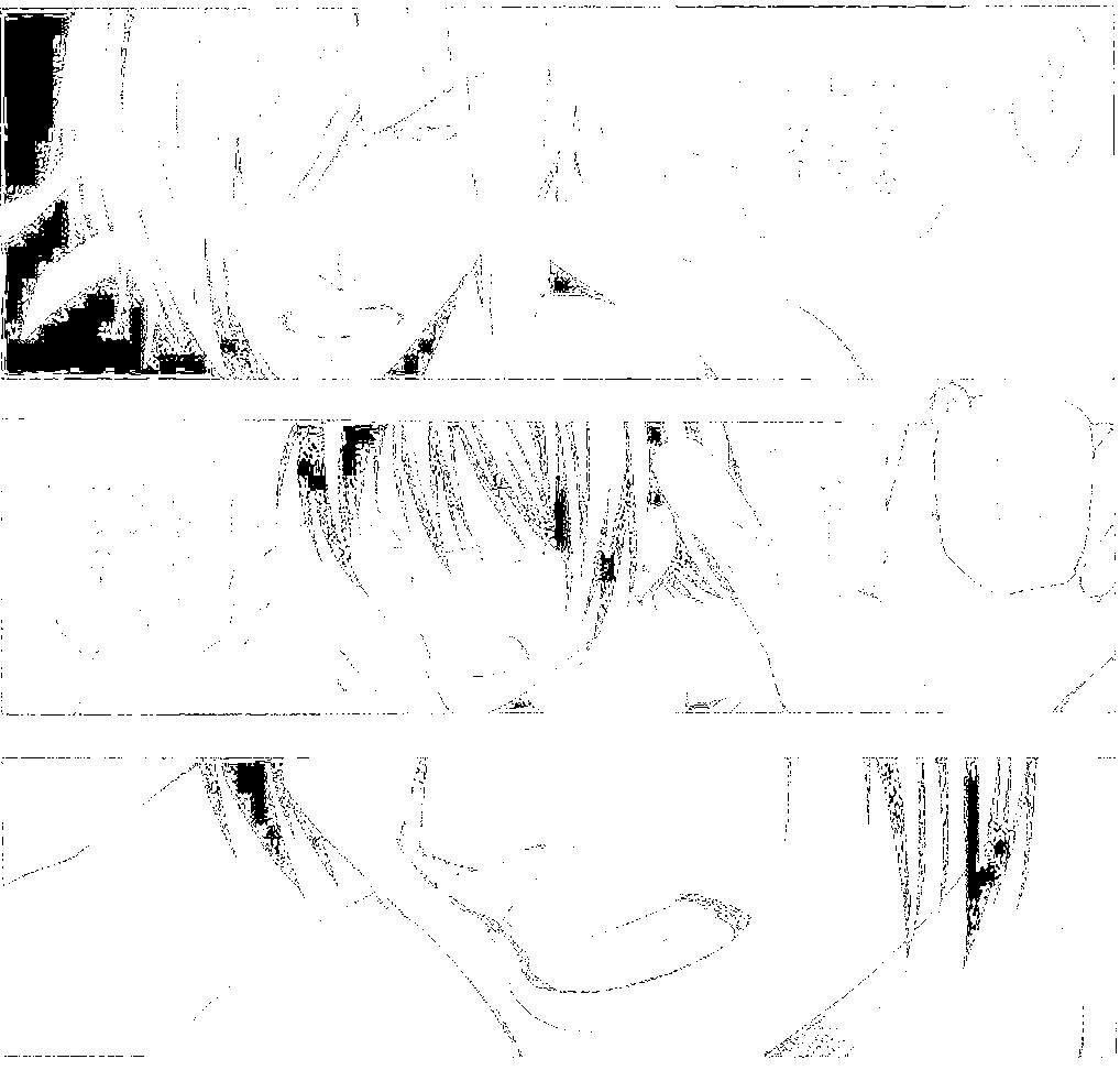 f:id:kirby-ex:20170129152510p:plain