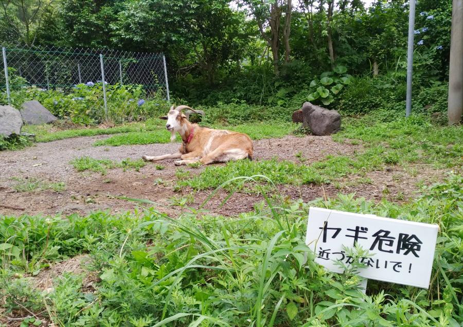 f:id:kirei-shisso:20180626155922j:plain