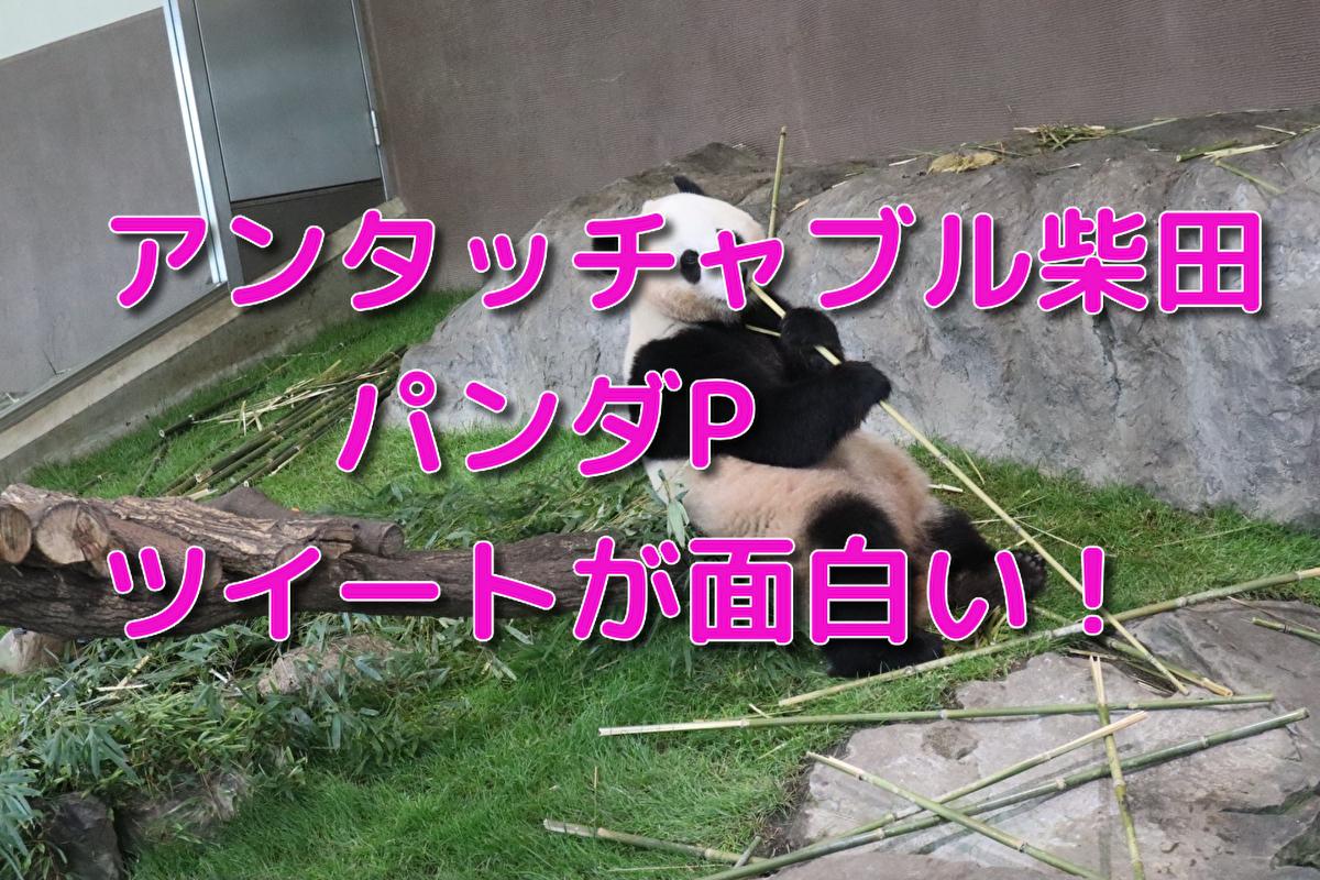 f:id:kireinakujira:20191205111858j:plain