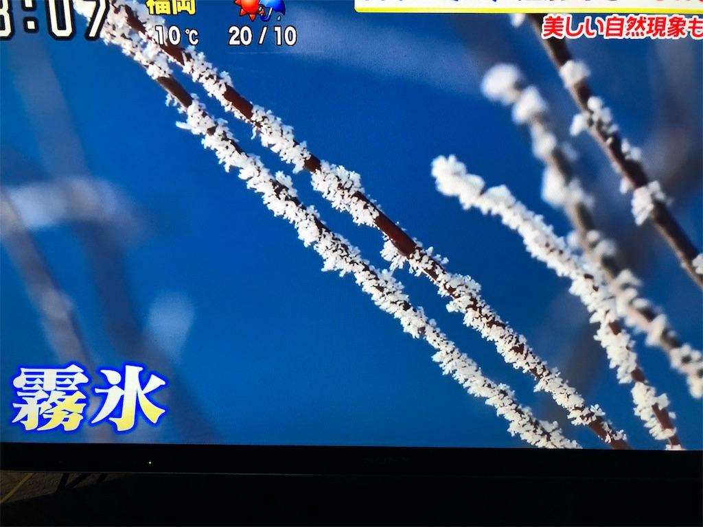 f:id:kirimura:20190211085428j:image
