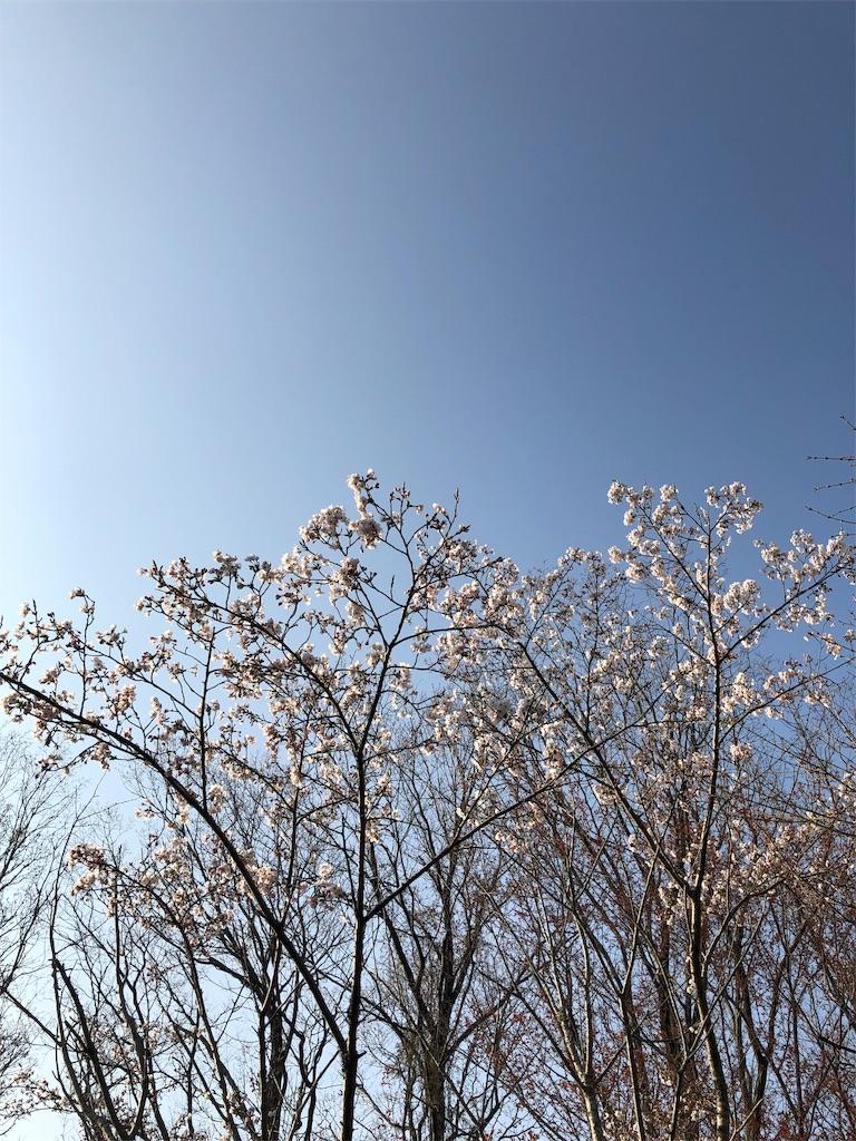 f:id:kirimura:20190406091104j:image