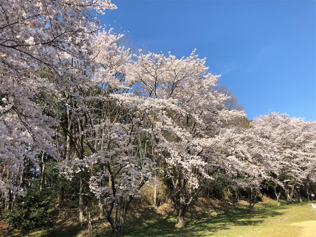 f:id:kirimura:20190409204725j:image
