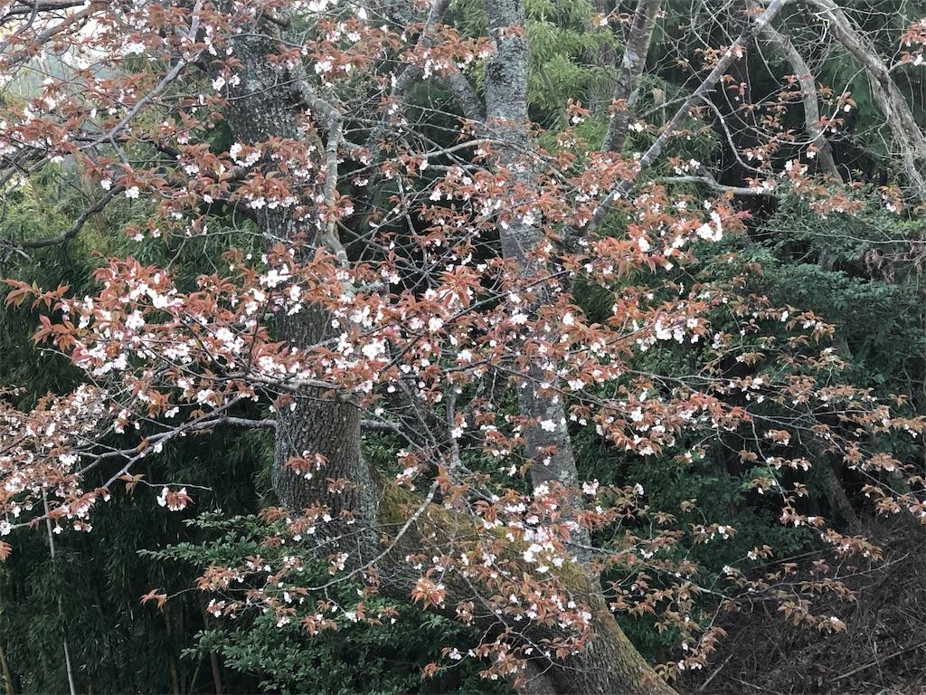 f:id:kirimura:20190418185540j:image