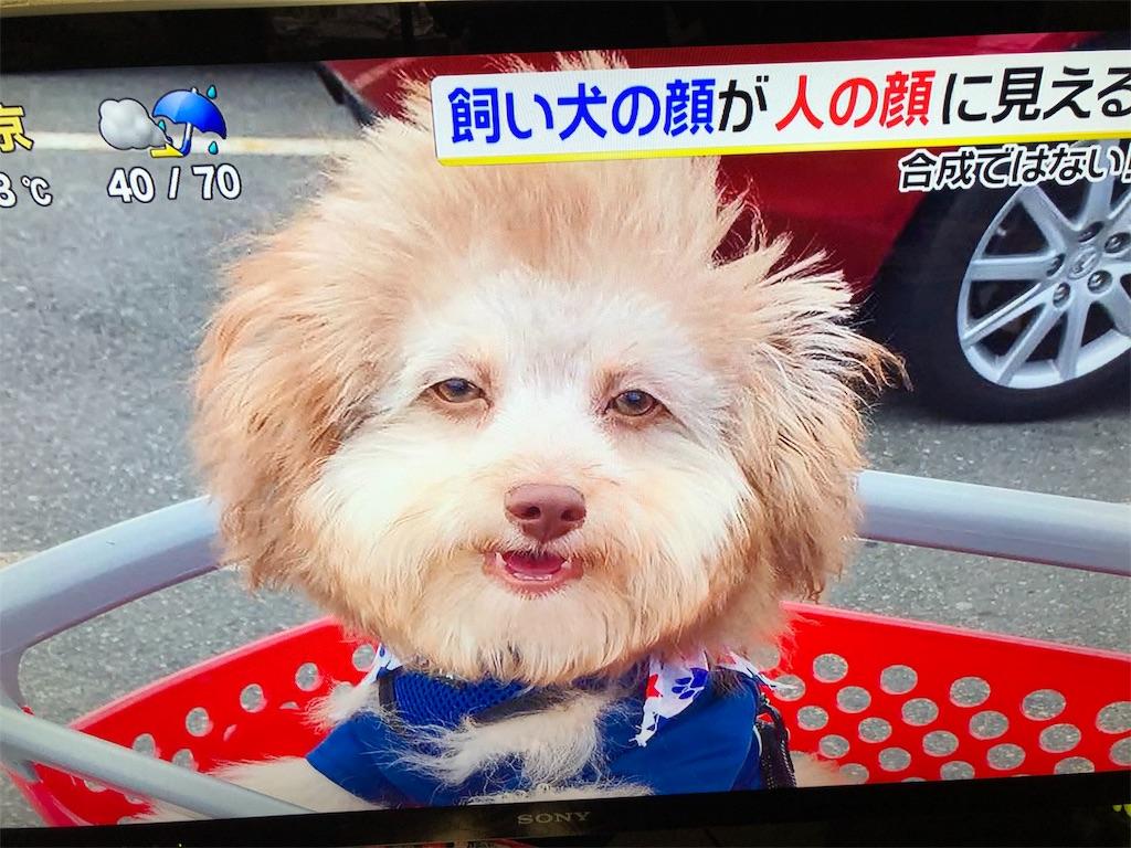 f:id:kirimura:20191015191454j:image