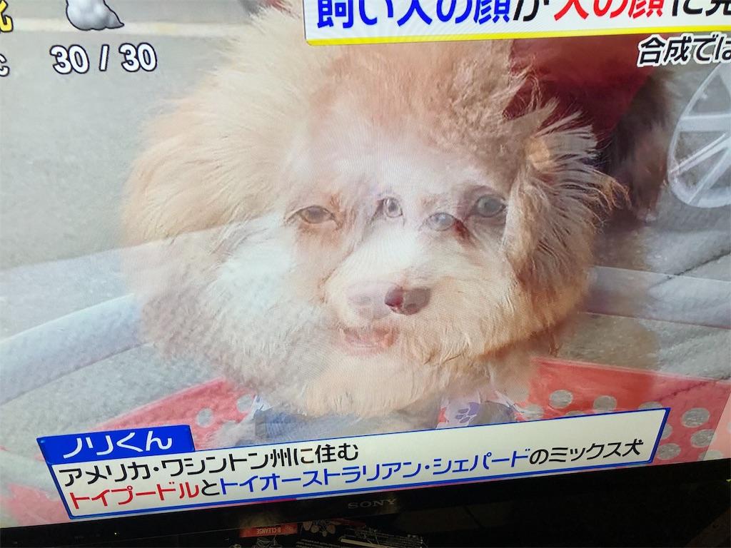 f:id:kirimura:20191015191623j:image