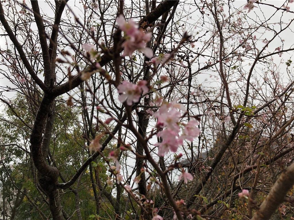 f:id:kirimura:20191130135255j:image