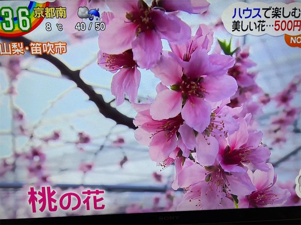 f:id:kirimura:20200227185238j:image