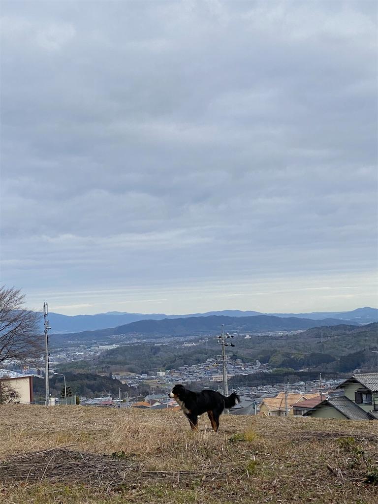 f:id:kirimura:20200228091008j:image