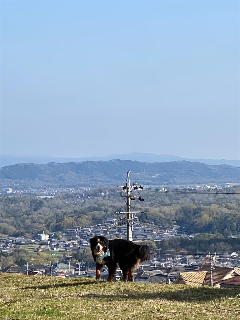 f:id:kirimura:20210411092356j:image