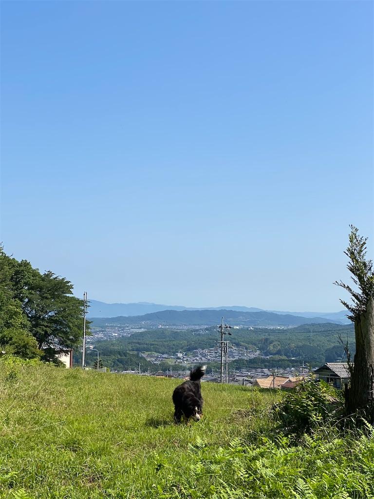 f:id:kirimura:20210601103736j:image