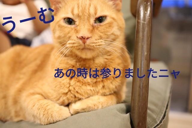 f:id:kirinchane:20190621225315j:image