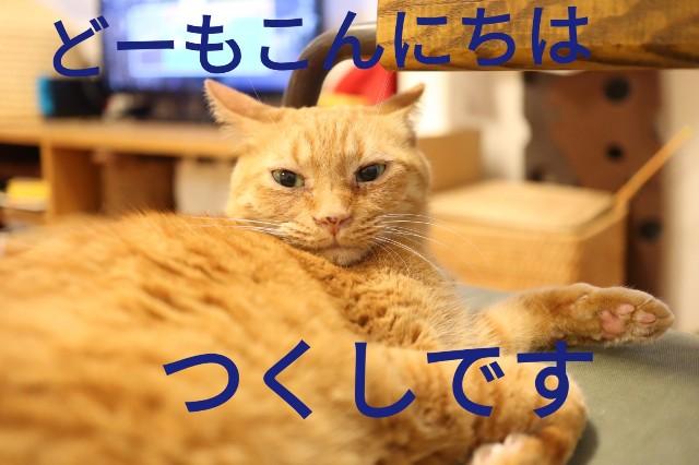 f:id:kirinchane:20190701234143j:image