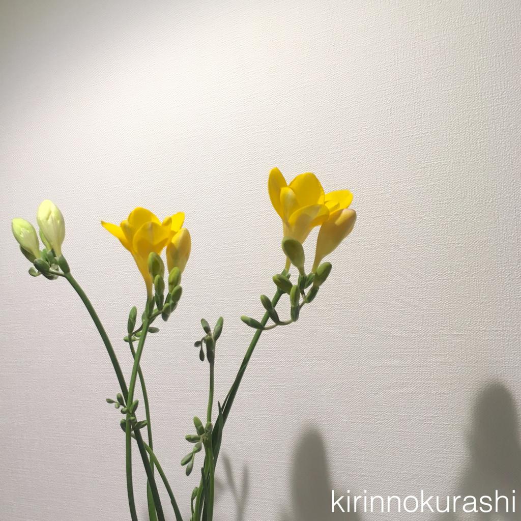 f:id:kirinnokurashi:20170410224949j:plain