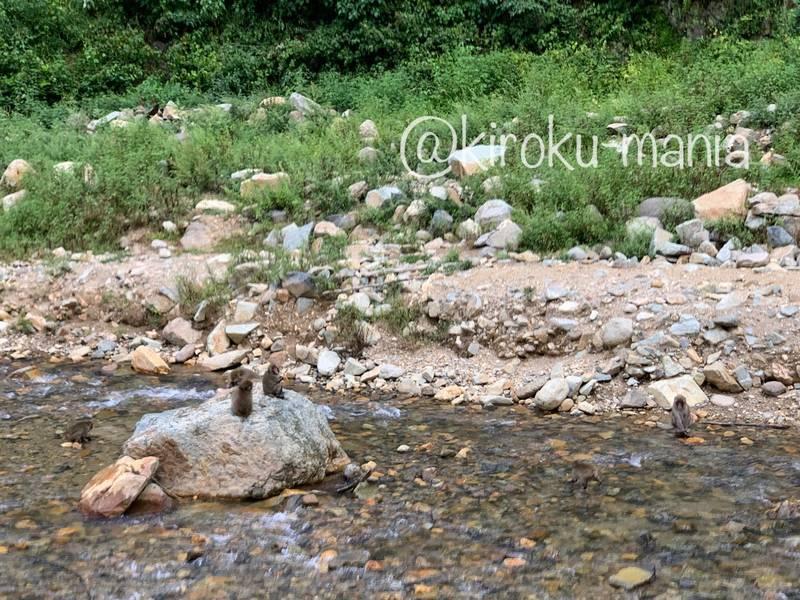 f:id:kiroku-mania:20201017183239j:plain