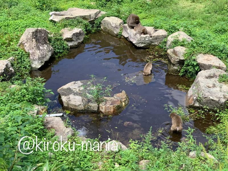 f:id:kiroku-mania:20201017183320j:plain