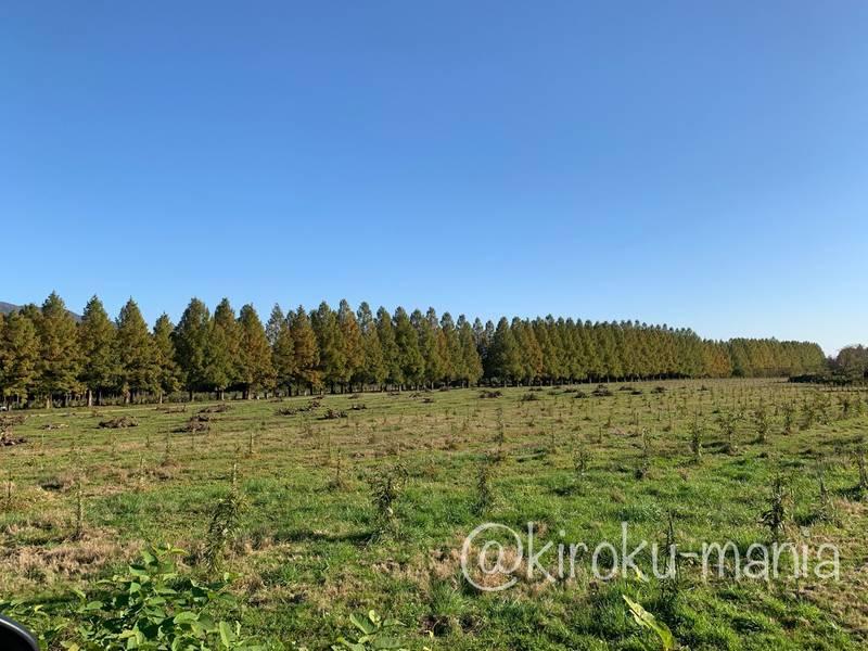 f:id:kiroku-mania:20210117210347j:plain