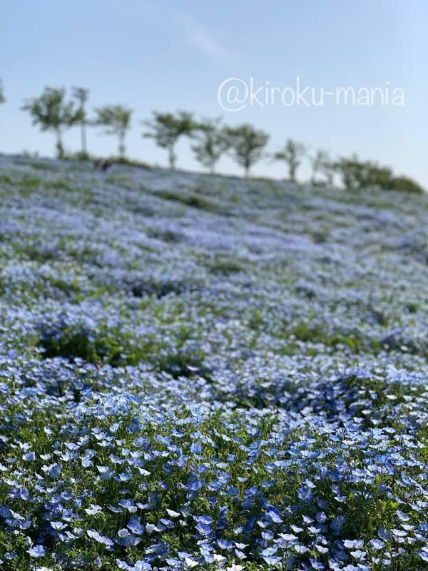 f:id:kiroku-mania:20210714151625j:plain