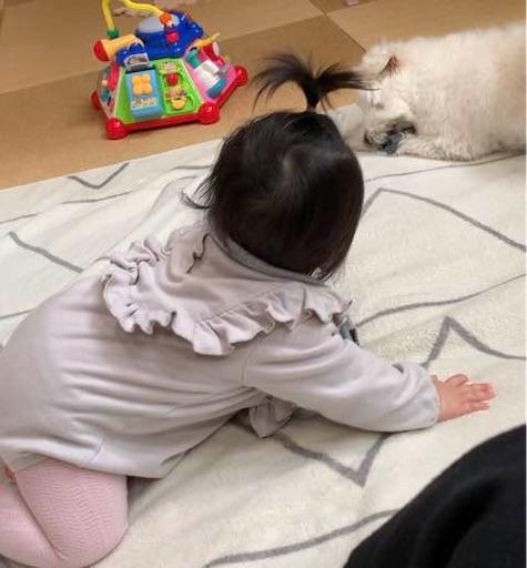 f:id:kisairo:20200402224400j:image