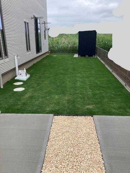 2か月後の芝生