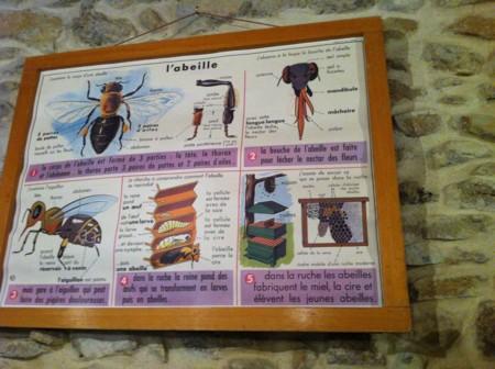 蜂について