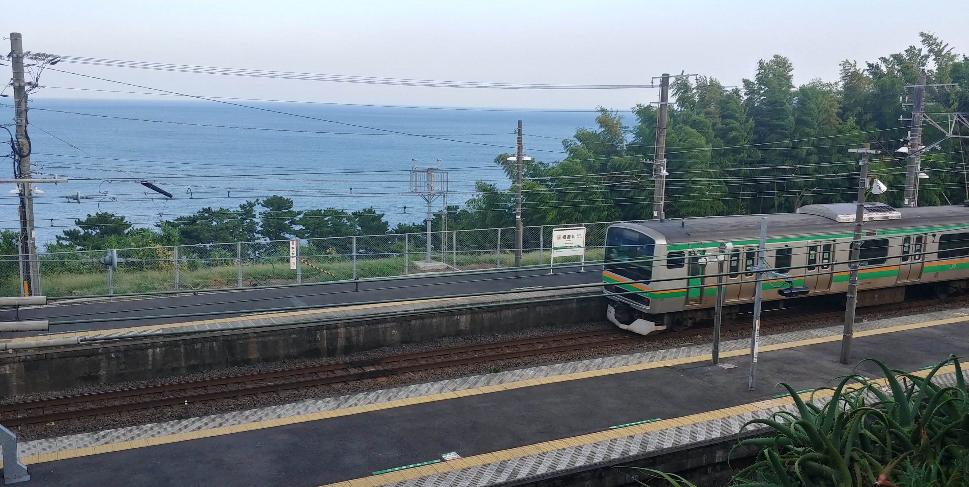 f:id:kishuji-kaisoku:20191106121243j:image