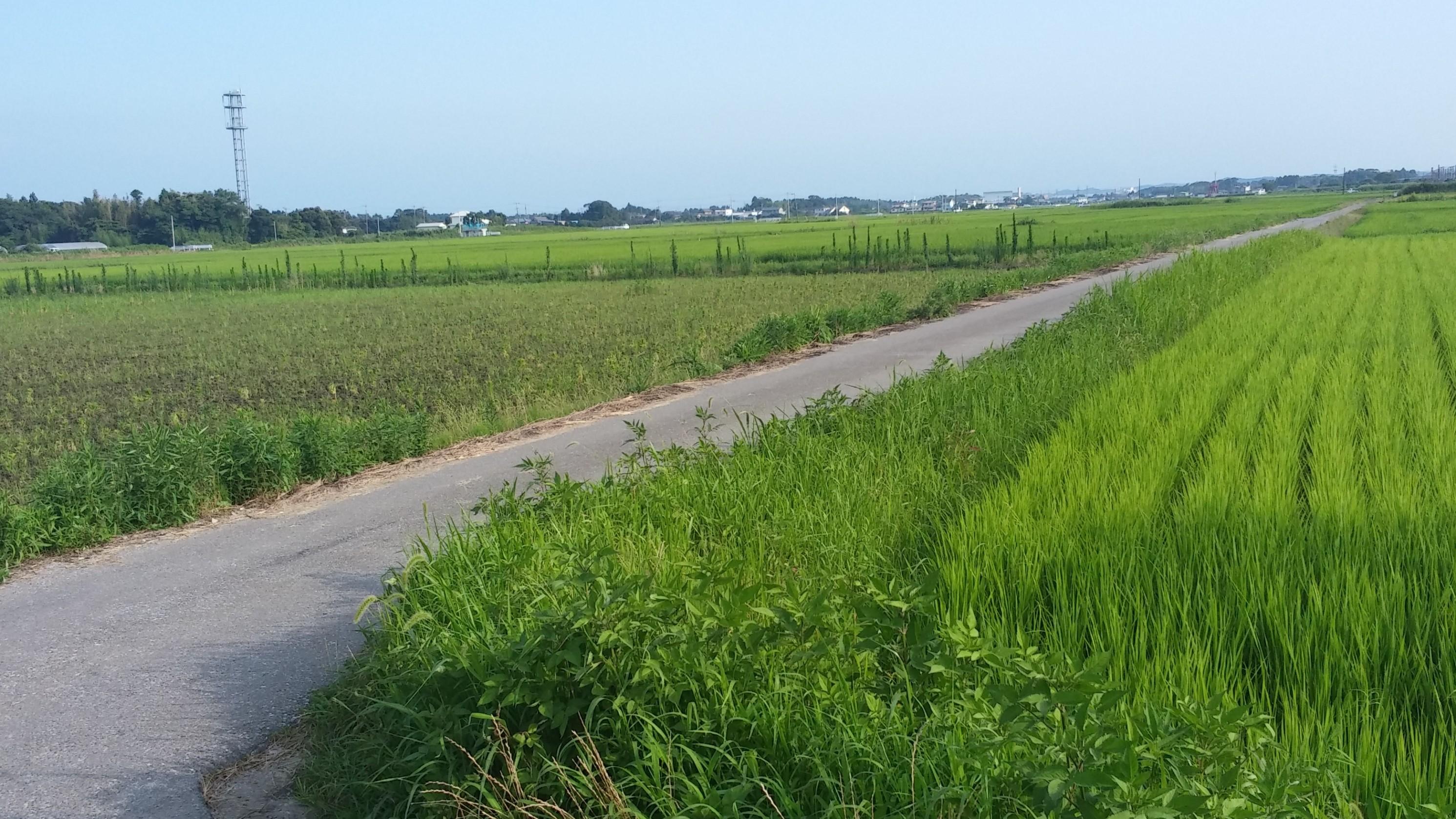 f:id:kishuji-kaisoku:20200103001605j:image