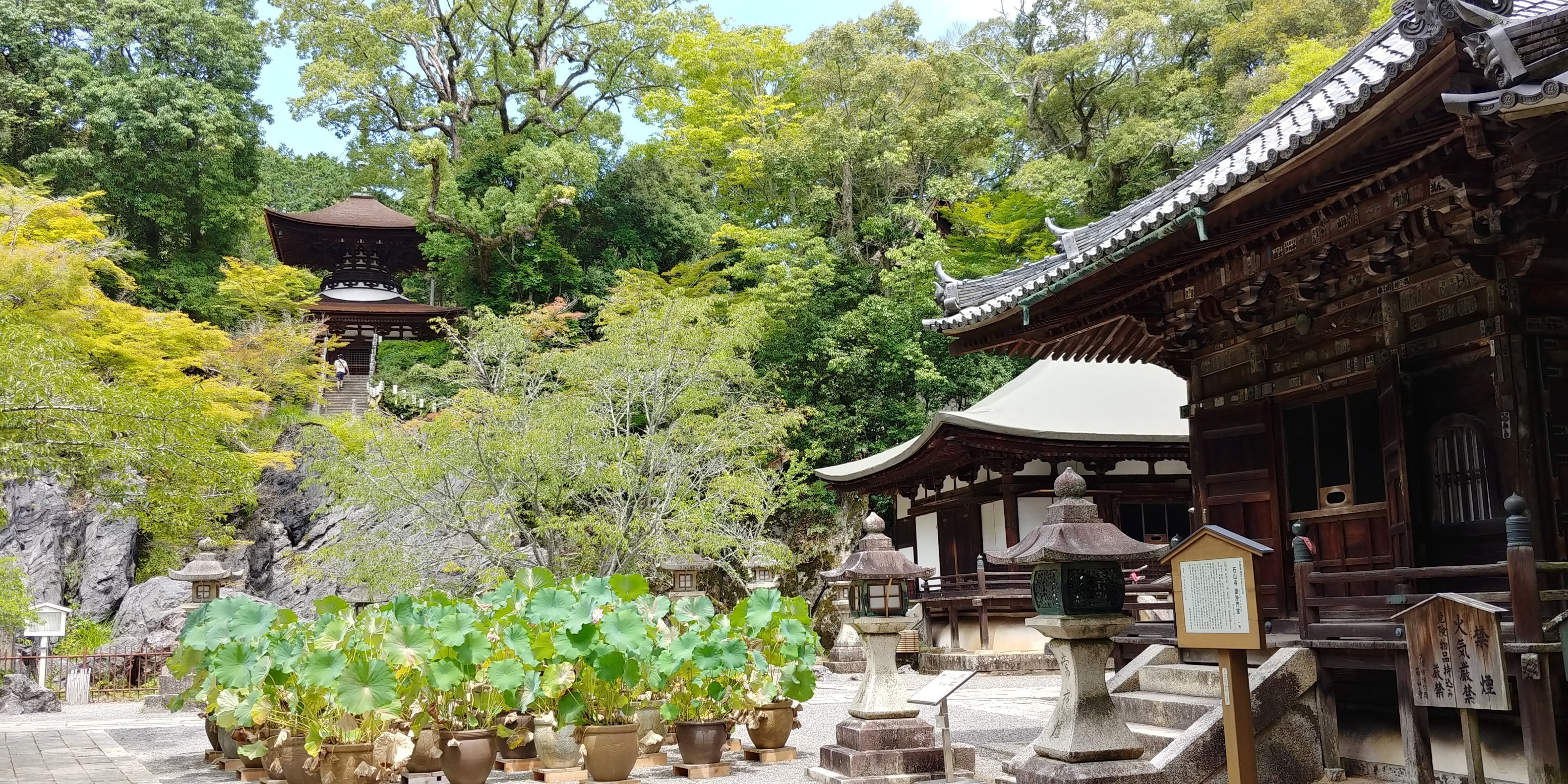 f:id:kishuji-kaisoku:20200121234820j:image