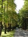 ゆりの木並木