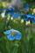 ヒマラヤの青いケシ・ロックガーデン