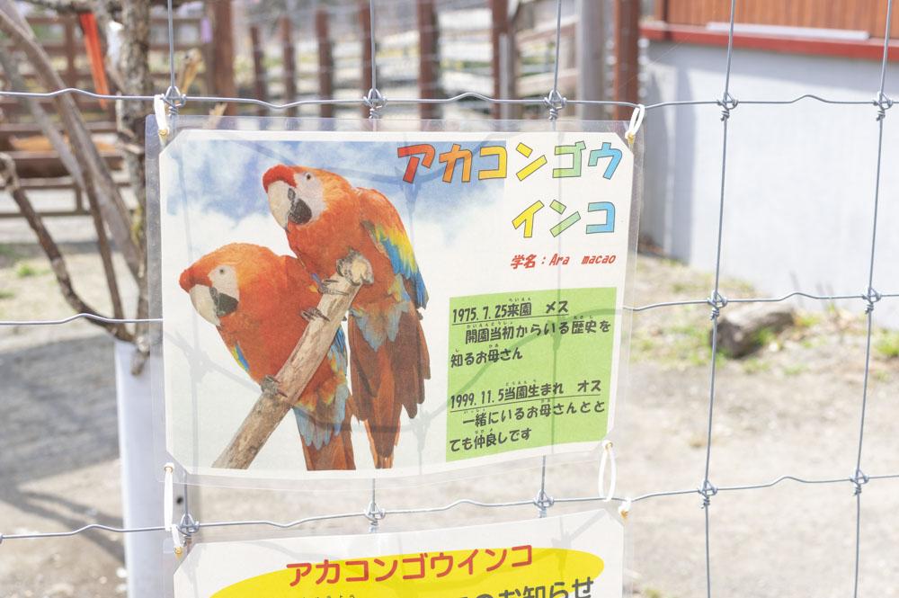 f:id:kisokoji:20210421165851j:plain:w500