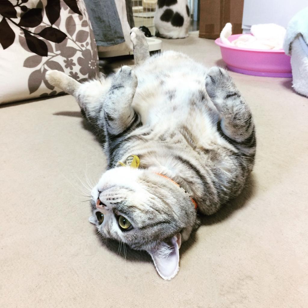 f:id:kissaneko:20161203204403j:plain