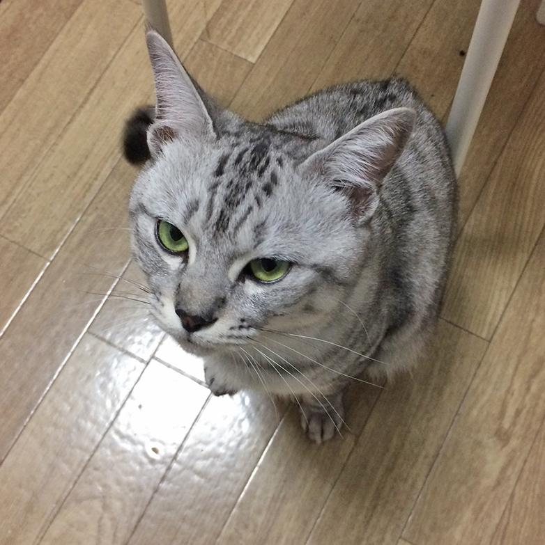 f:id:kissaneko:20161208170204j:plain