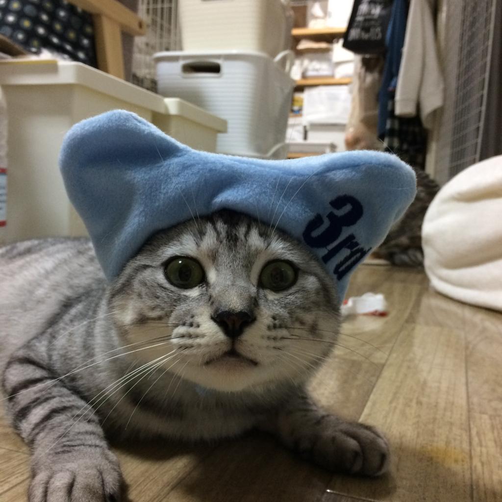f:id:kissaneko:20161210213400j:plain
