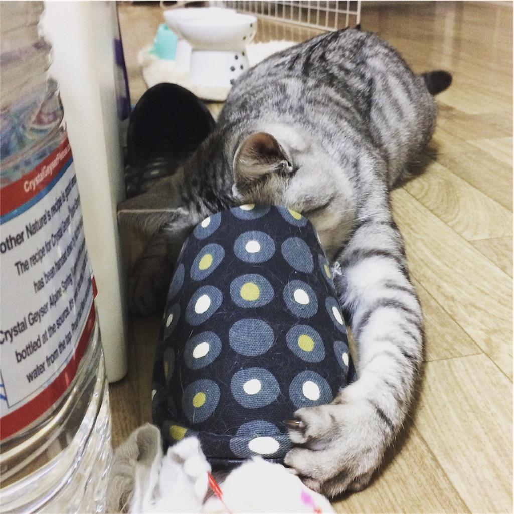 f:id:kissaneko:20161213184145j:image