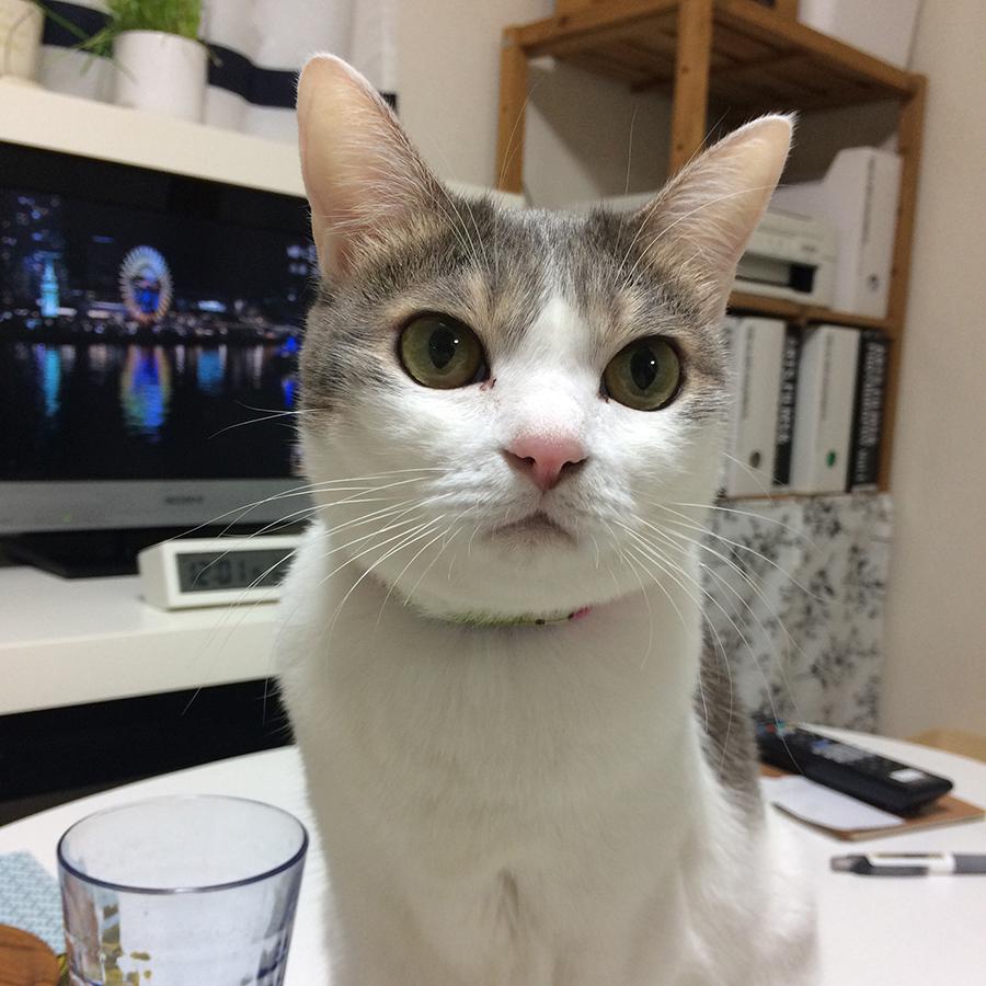 f:id:kissaneko:20170102064404j:plain