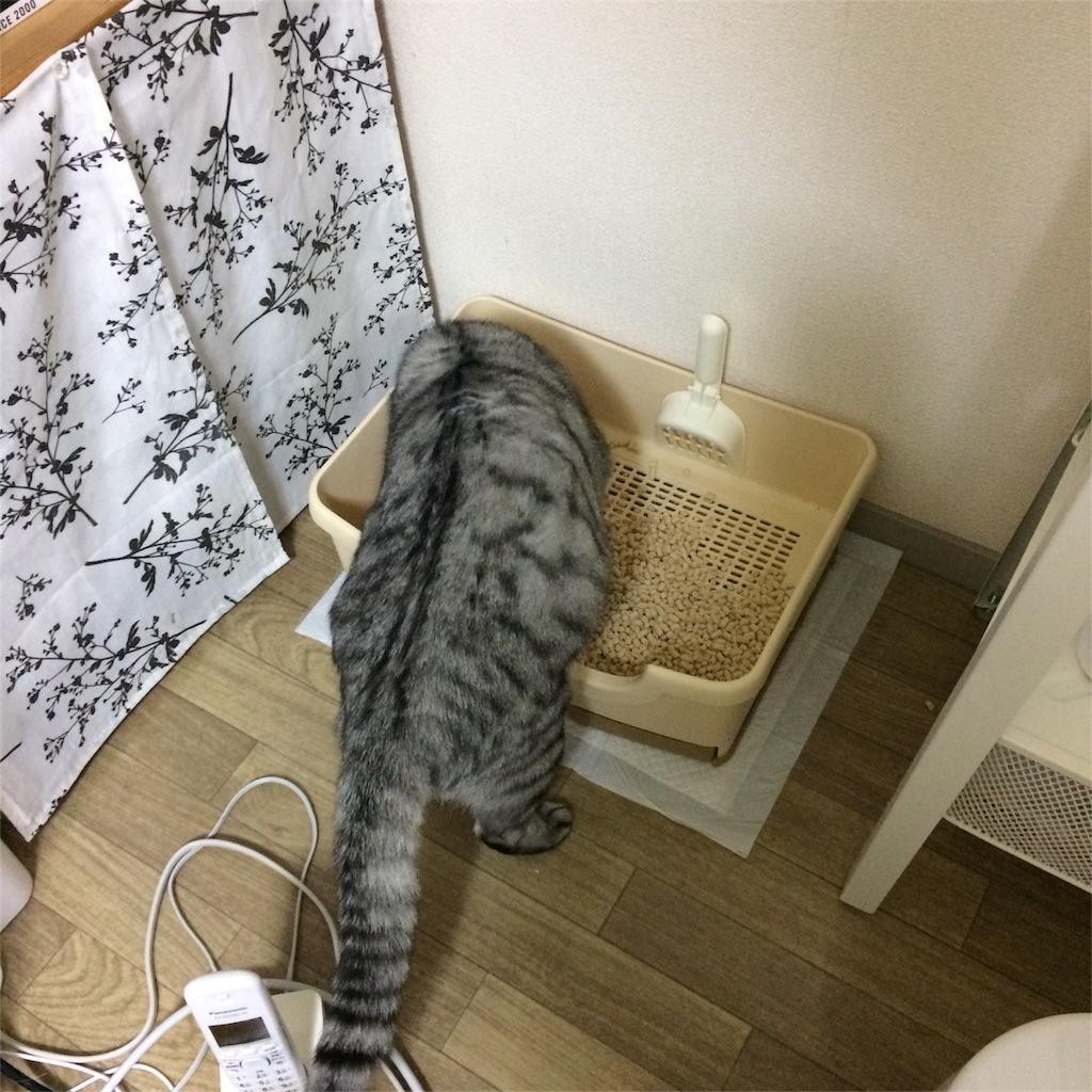 f:id:kissaneko:20170111234347j:image