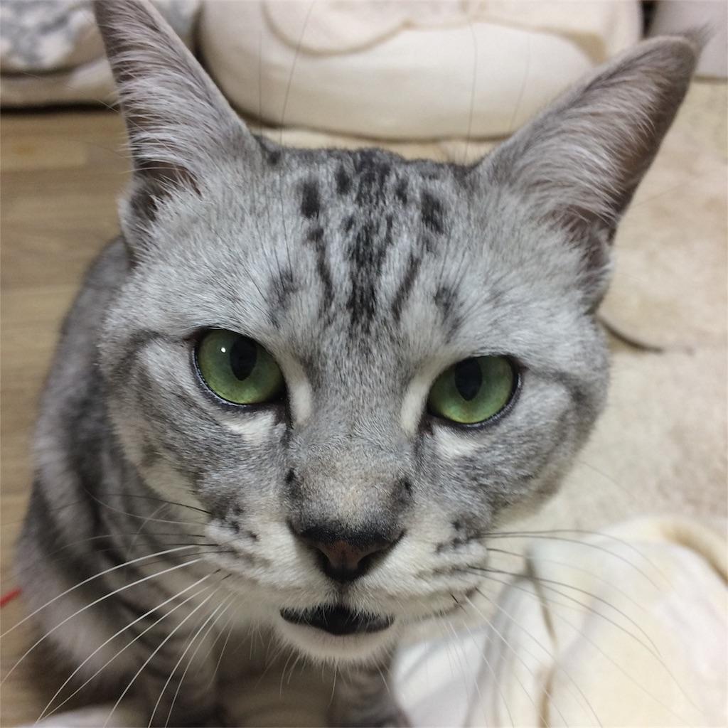 f:id:kissaneko:20170117220945j:image