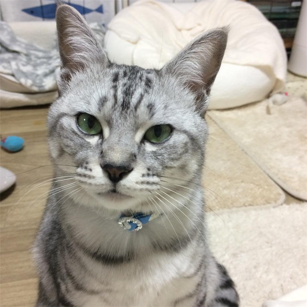 f:id:kissaneko:20170117221255j:image