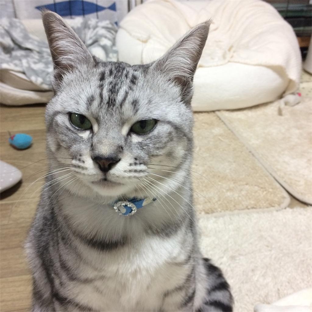 f:id:kissaneko:20170117221507j:image