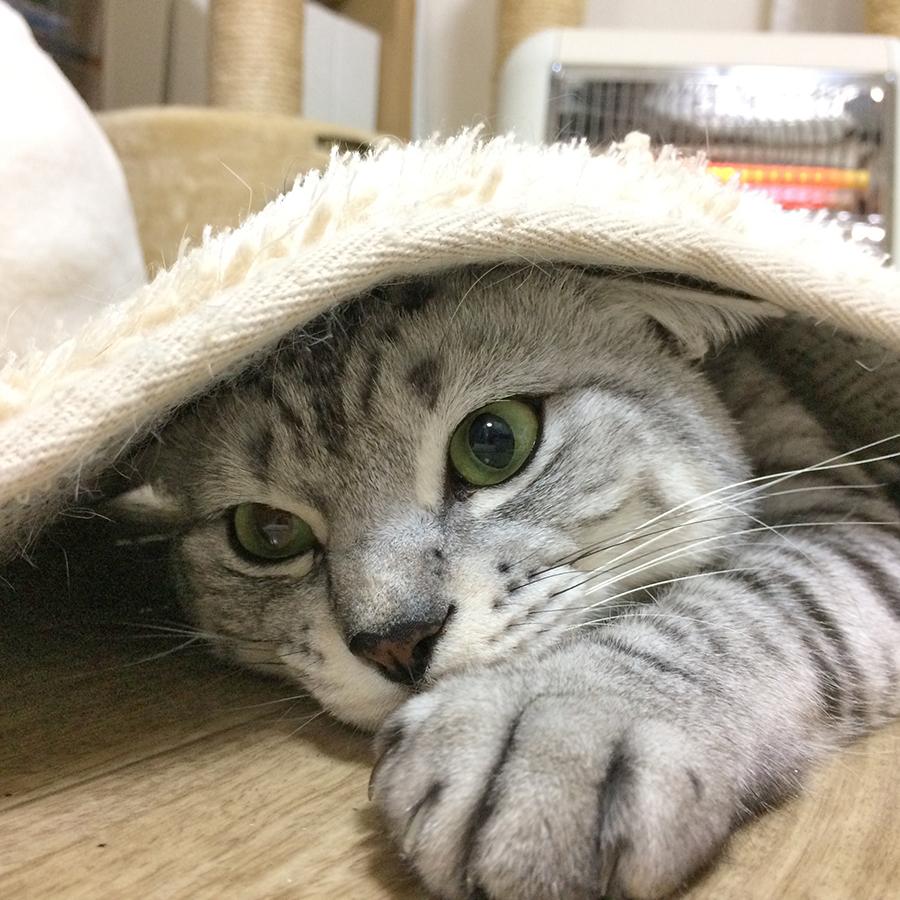 f:id:kissaneko:20170130203606j:plain