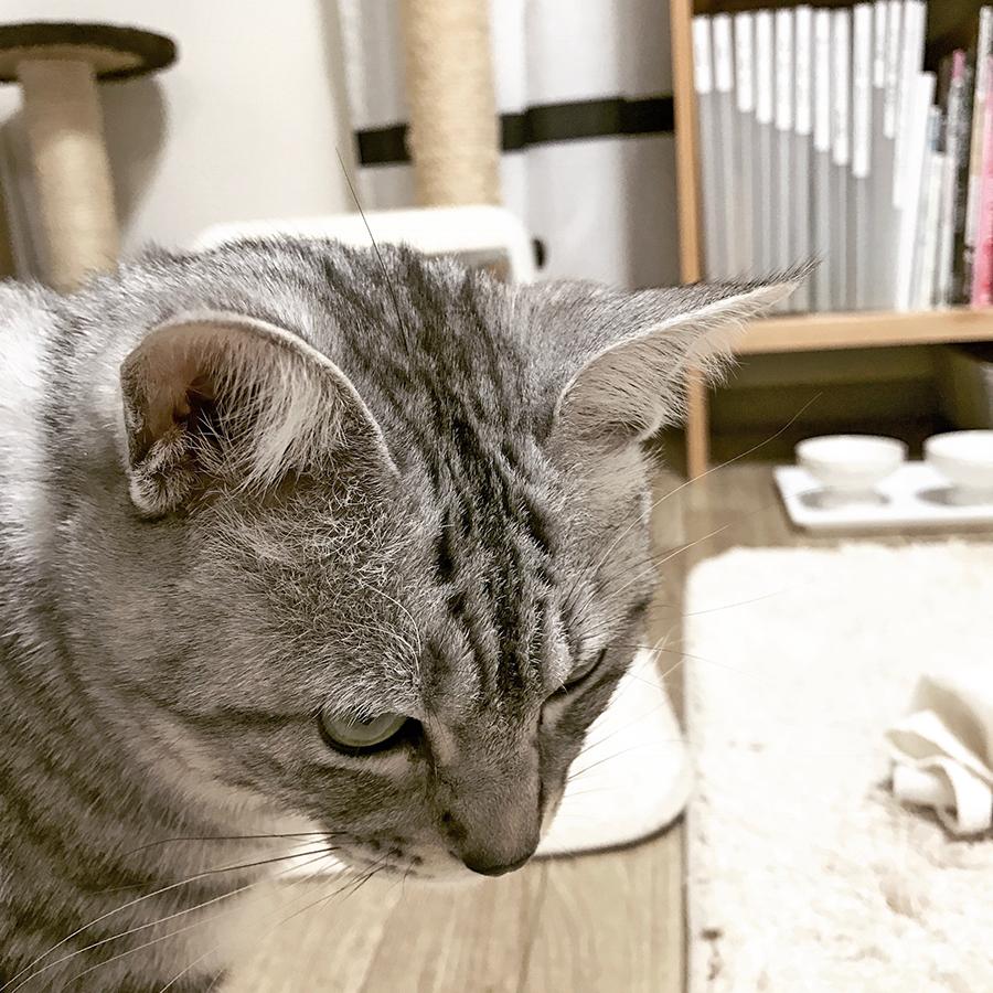 f:id:kissaneko:20170131222401j:plain