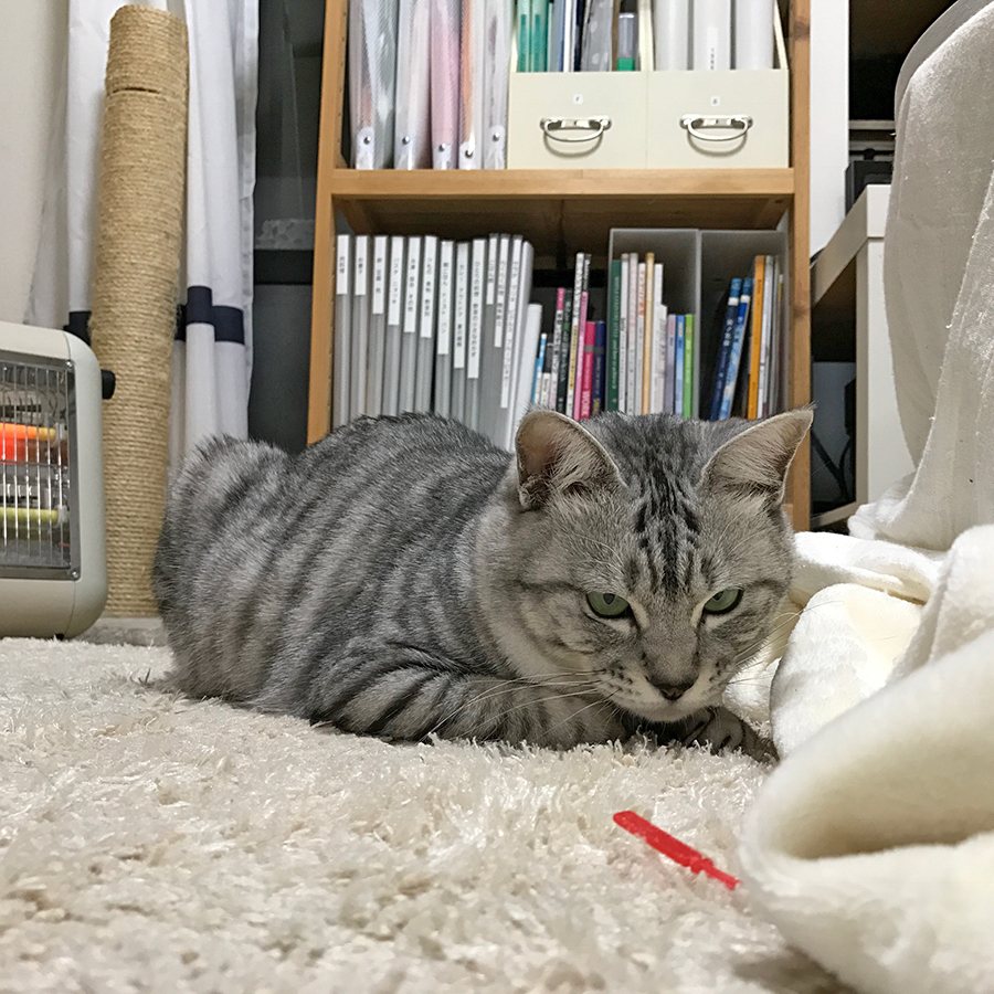 f:id:kissaneko:20170202235359j:plain